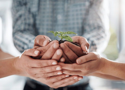Modelo de negocio Sustentable